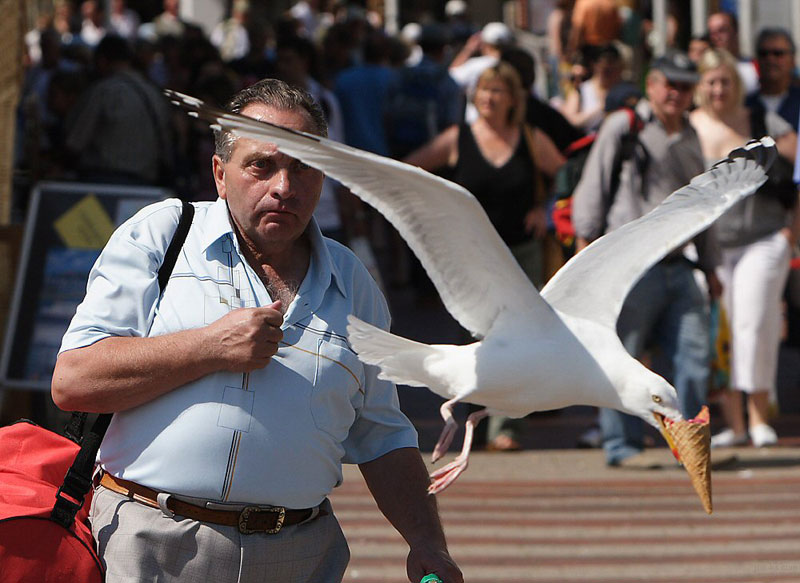 seagull-takes-ice-cream-perfect-timing