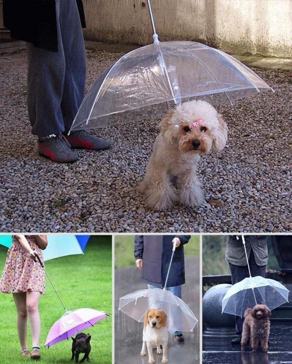 the-dogbrella