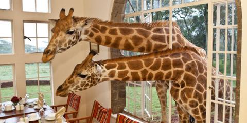 Необыкновенный-бутик-–-отель-Giraffe-Manor-в-Кении.2