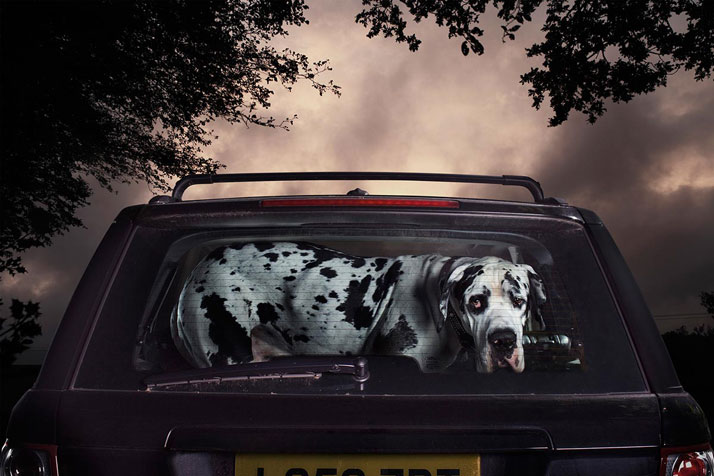 2-Martin-Usborne-The-Silence-Of-Dogs-In-Cars-yatzer