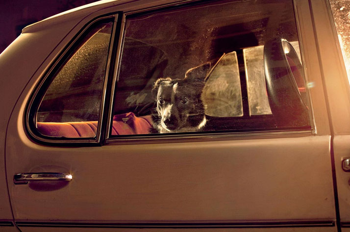 3-Martin-Usborne-The-Silence-Of-Dogs-In-Cars-yatzer