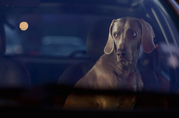 6-Martin-Usborne-The-Silence-Of-Dogs-In-Cars-yatzer