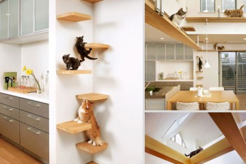 furniture-design-for-pet-lovers-17