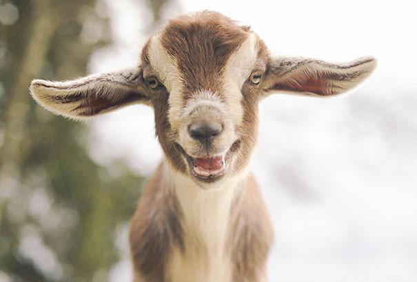 cute-smiling-animals-4