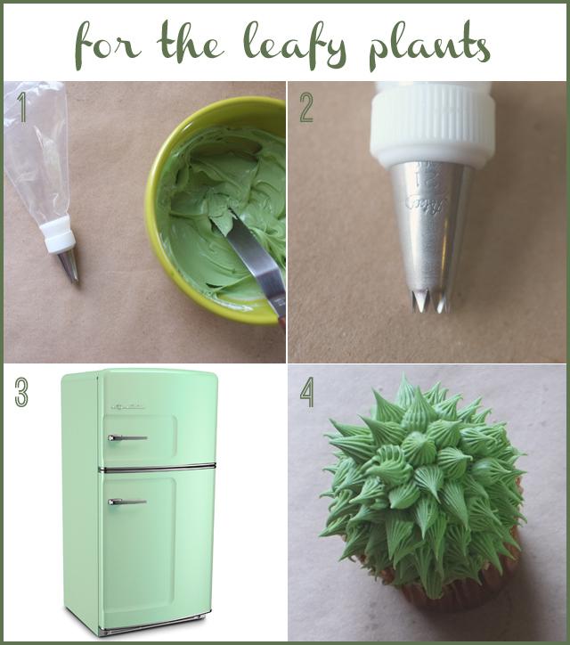 domácí kaktusy2
