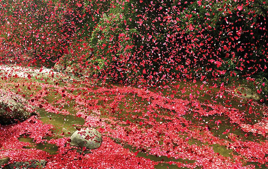 flower-petals-sony-4k-ultra-hd-advertisement-campaign-costa-rica-7