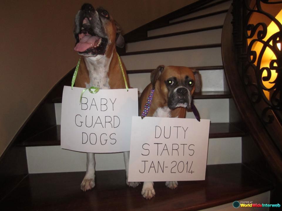 funny-birth-announcements_20130814_1372605689