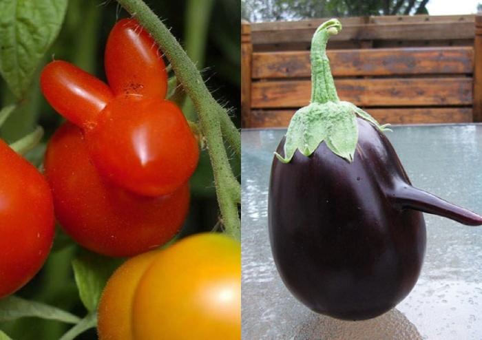 funny-vegetables-13_postcard