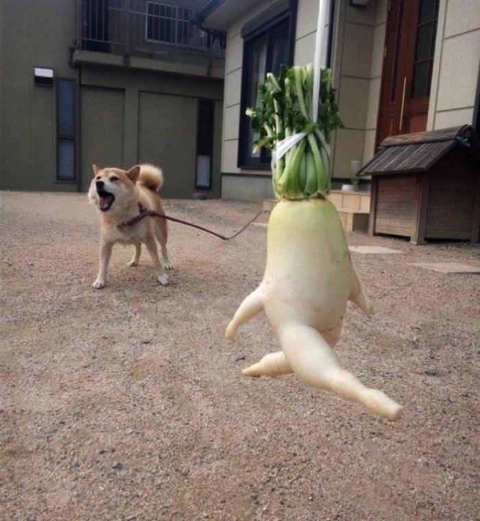 funny-vegetables-5