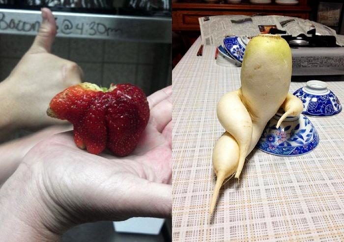 funny-vegetables-8_postcard