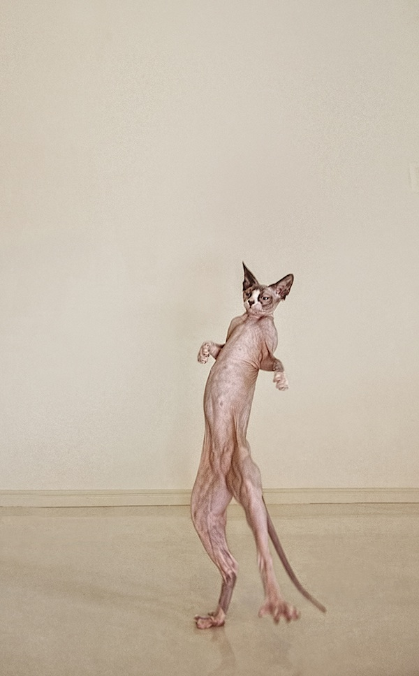 hairlesscat09