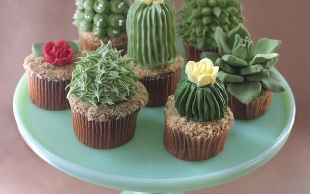 kaktusy2