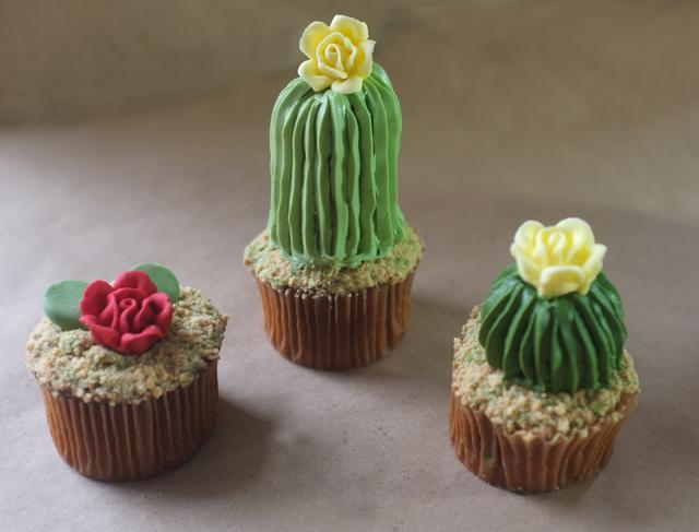 kaktusy3