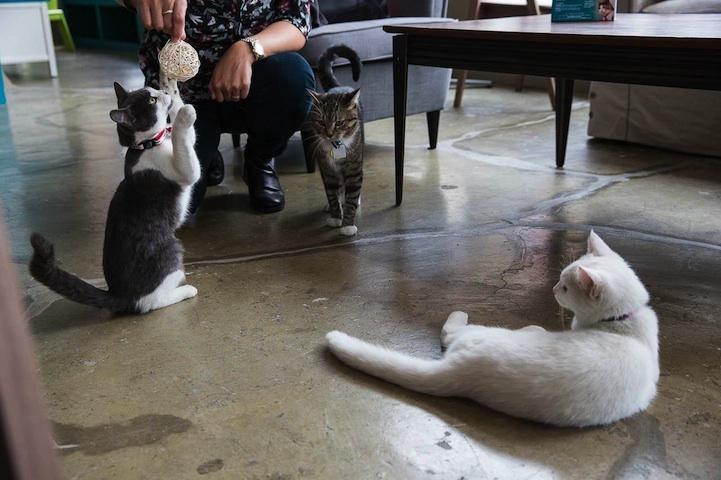 kočičí kavárna6