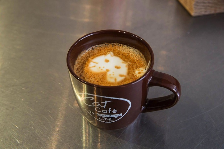 kočičí kavárna9