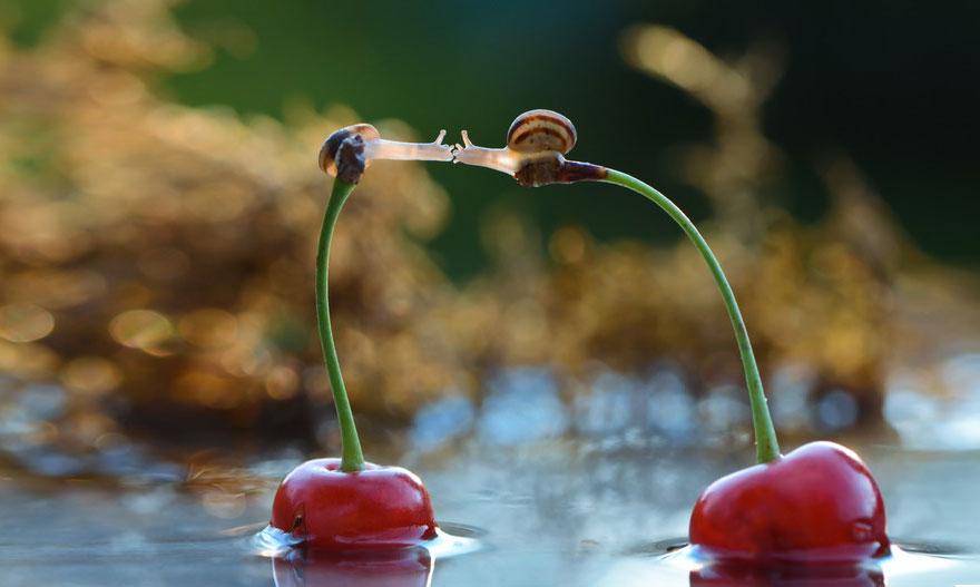 macro-photography-snails-vyacheslav-mishchenko-1