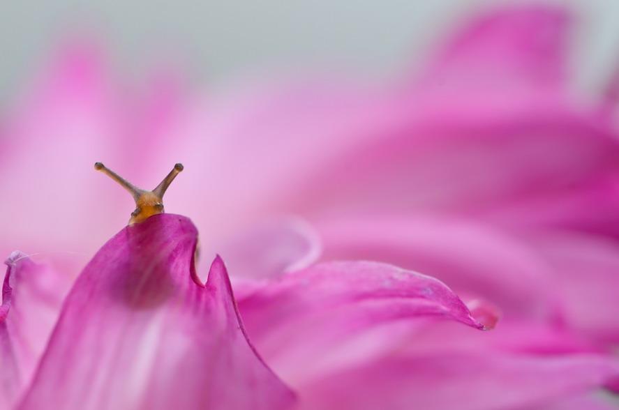 macro-photography-snails-vyacheslav-mishchenko-11