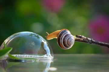 macro-photography-snails-vyacheslav-mishchenko-7