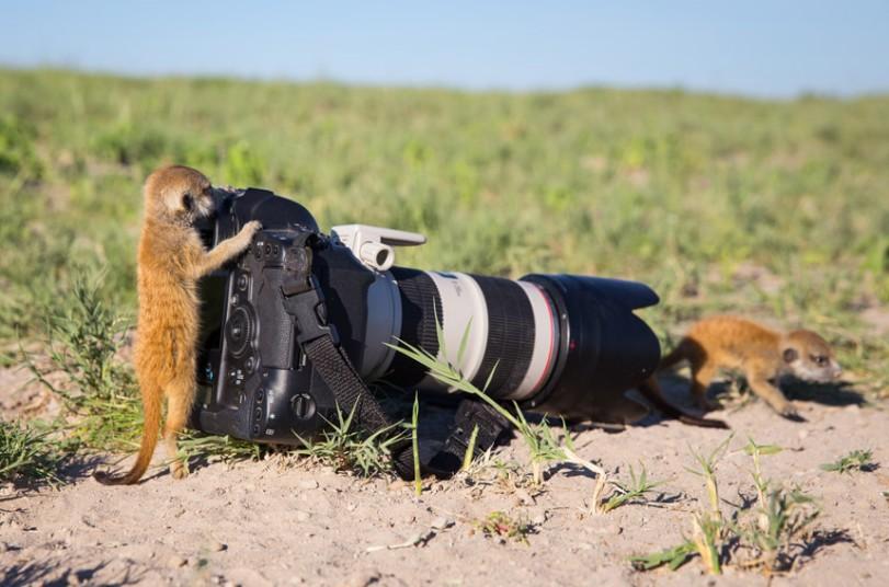 meerkat-3_2875881k