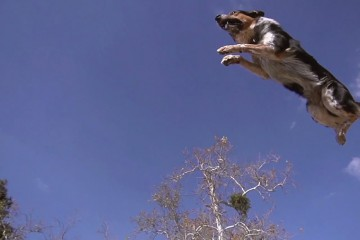 JUmpy-the-parkour-dog