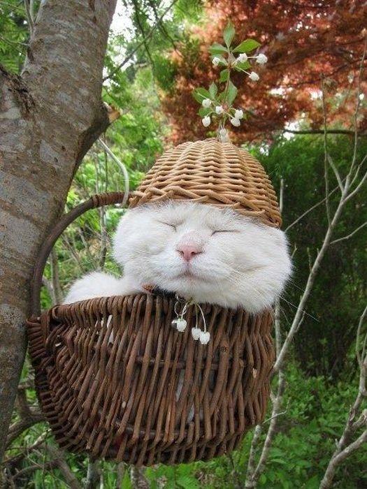 Shironeko kočka10