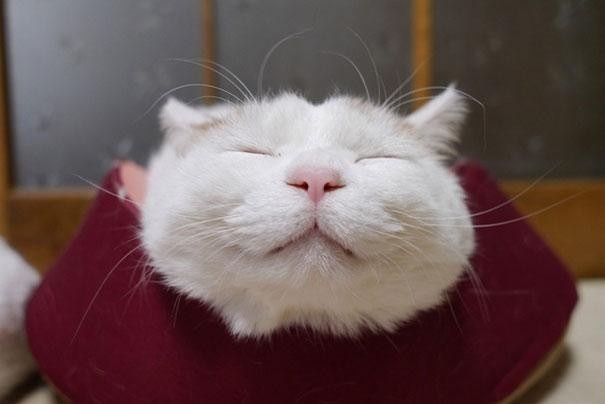 Shironeko kočka5