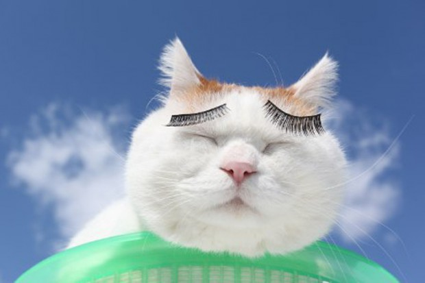 Shironeko kočka3