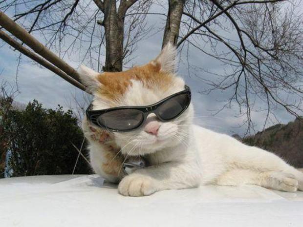 Shironeko kočka7