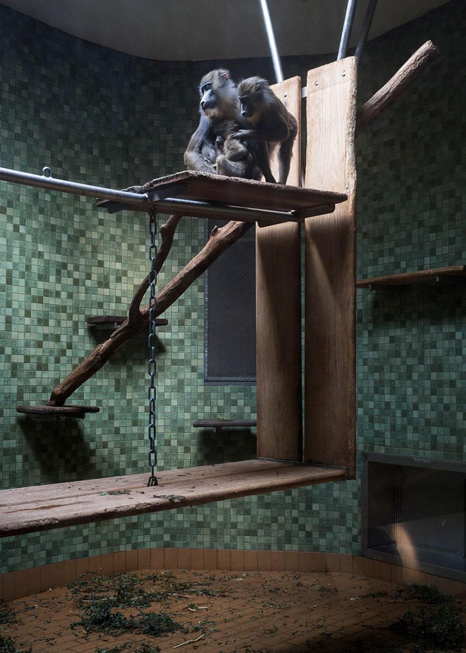 zoo-animals-lost-behind-bars-elias-hassos-14