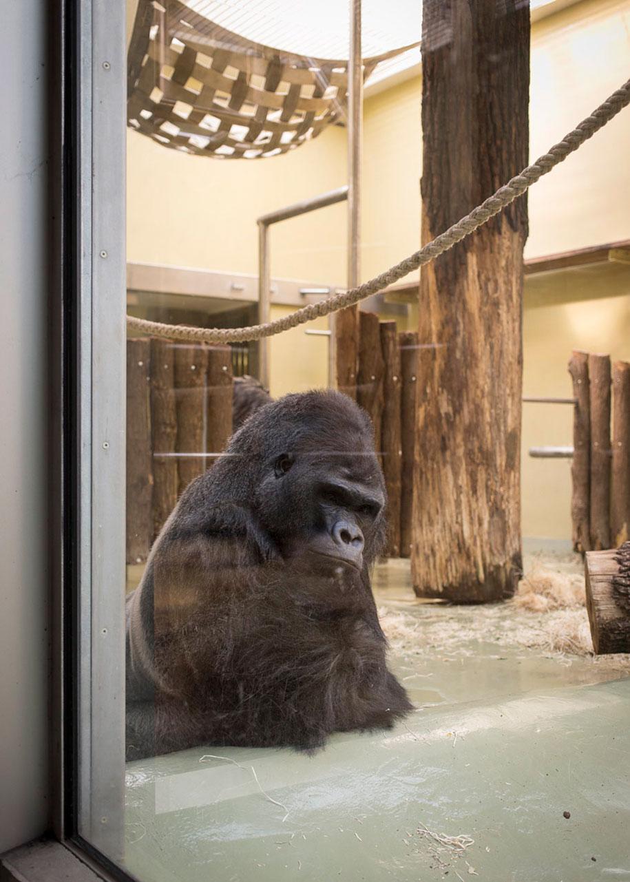 zoo-animals-lost-behind-bars-elias-hassos-15