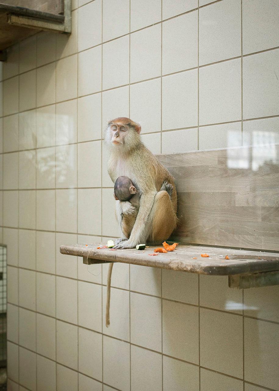 zoo-animals-lost-behind-bars-elias-hassos-16