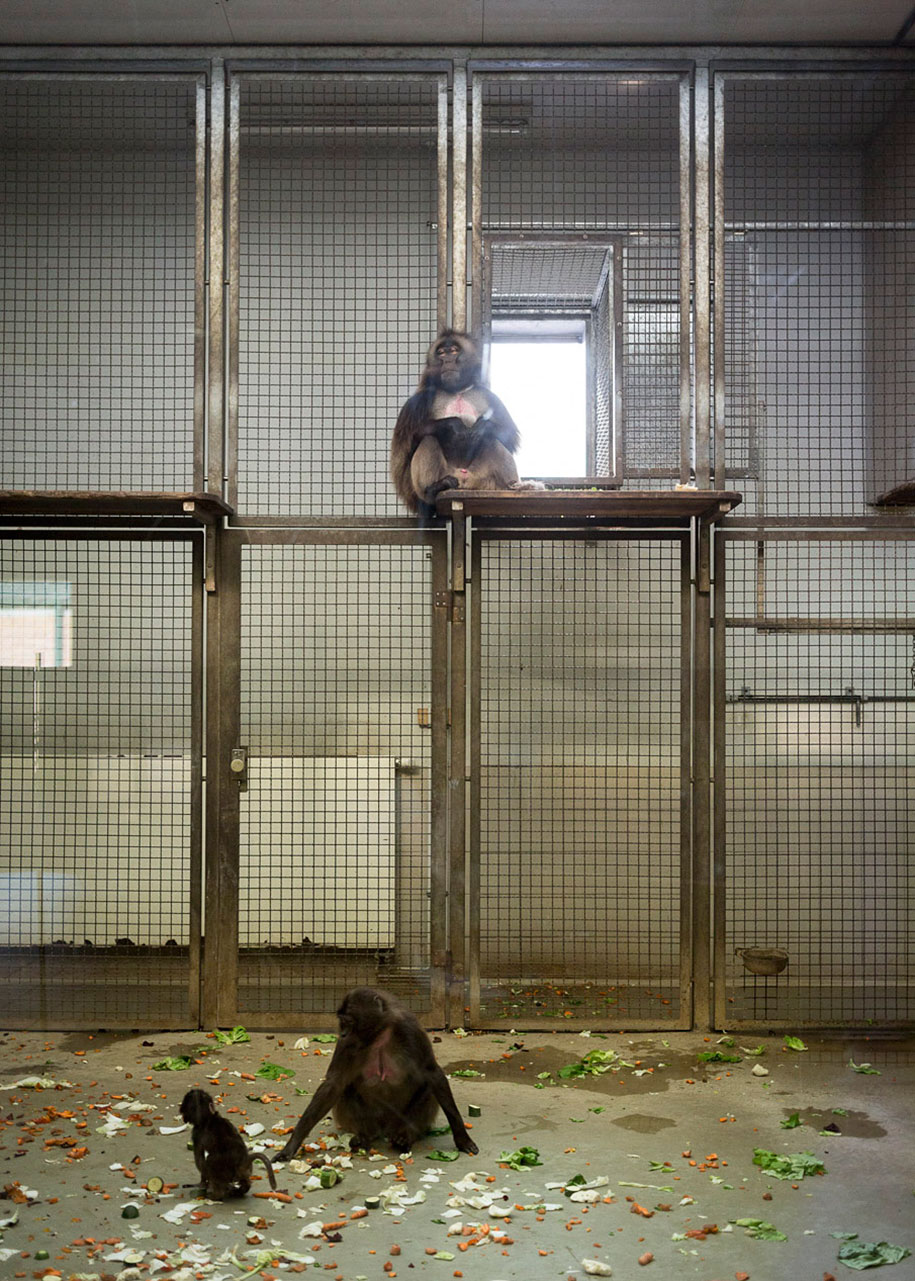 zoo-animals-lost-behind-bars-elias-hassos-3