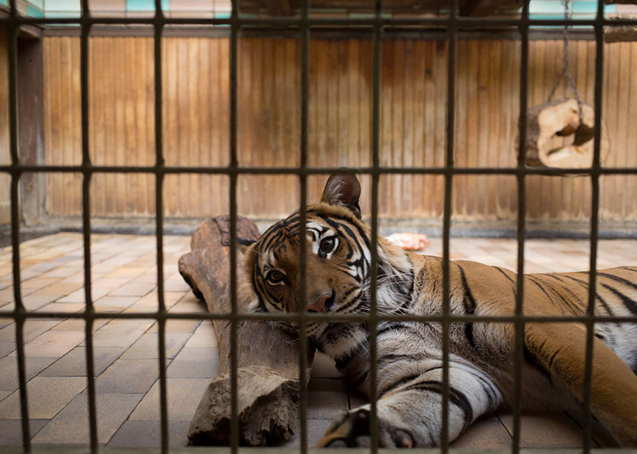 zoo-animals-lost-behind-bars-elias-hassos-4
