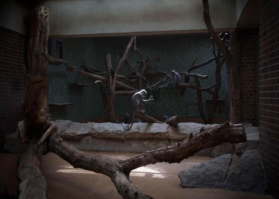 zoo-animals-lost-behind-bars-elias-hassos-5