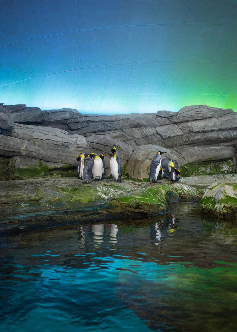 zoo-animals-lost-behind-bars-elias-hassos-6