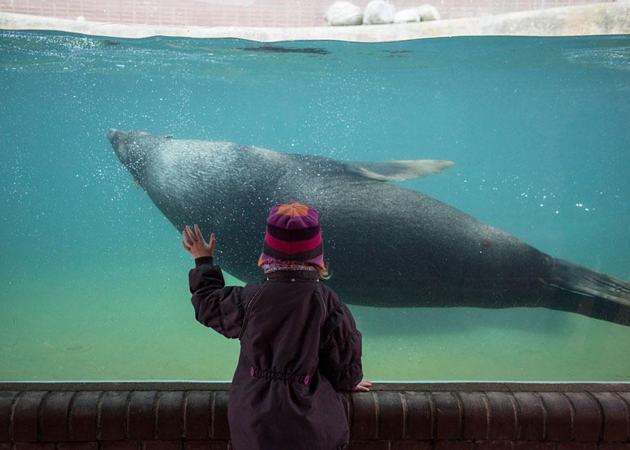 zoo-animals-lost-behind-bars-elias-hassos-7