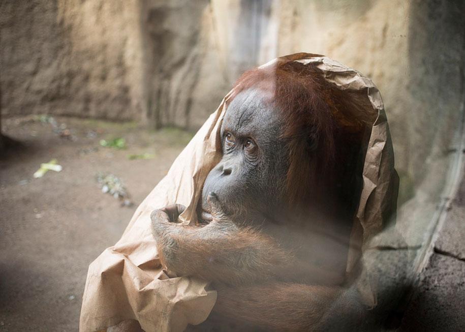 zoo-animals-lost-behind-bars-elias-hassos-9