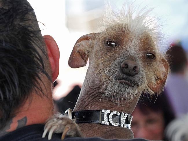 nejošklivější pes