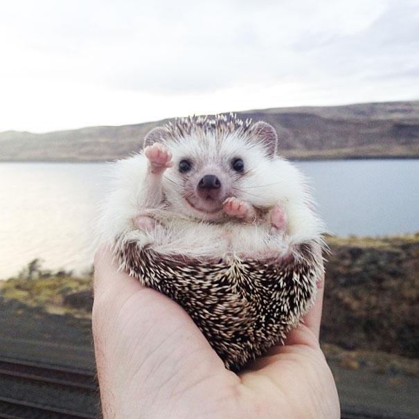 biddy-cute-hedgehog-adventures-16