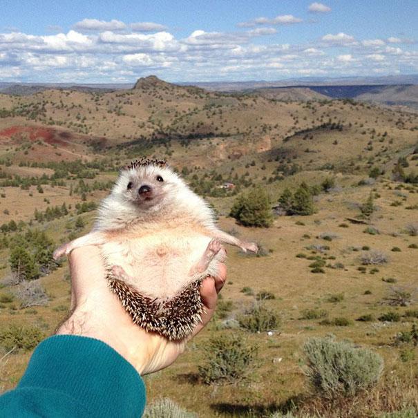biddy-cute-hedgehog-adventures-2
