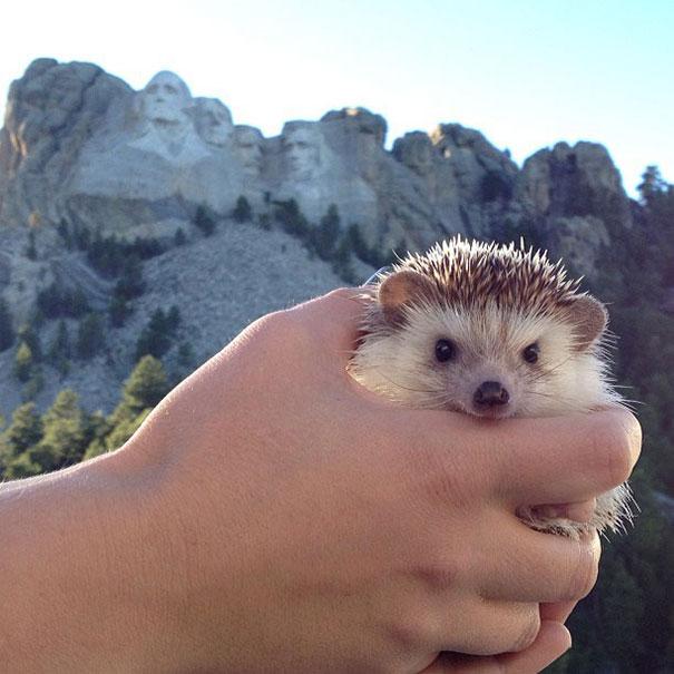 biddy-cute-hedgehog-adventures-5