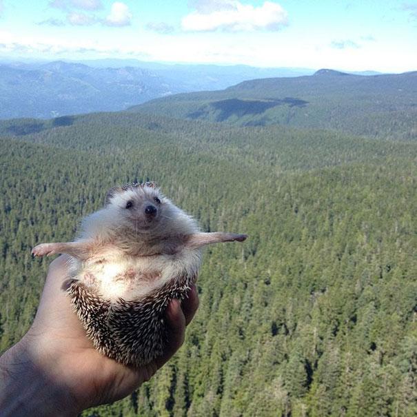 biddy-cute-hedgehog-adventures-7