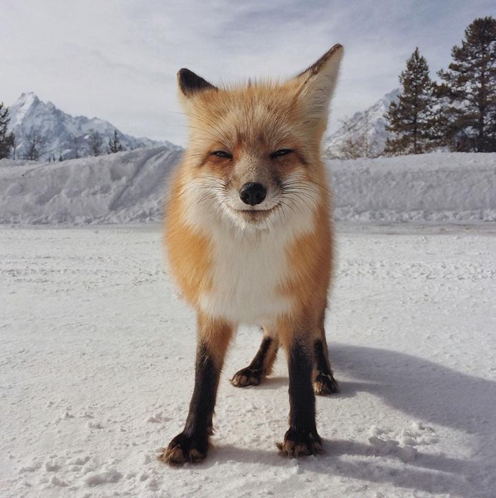 MICHAEL ONEAL, Spojené Státy, 1. místo v kategorii Zvířata
