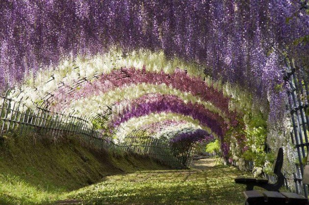 10-Startling-Tree-Tunnels-You-Must-Walk-Through-1-630x419