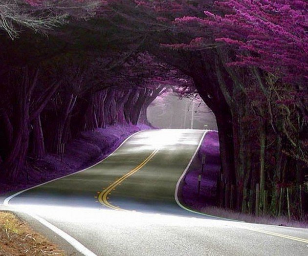 10-Startling-Tree-Tunnels-You-Must-Walk-Through-2-630x524