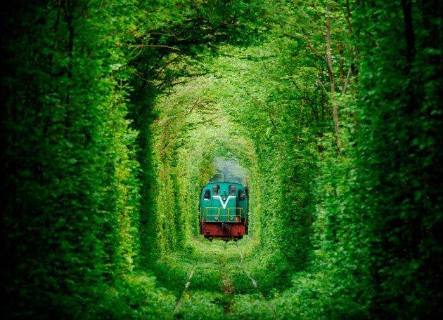 10-Startling-Tree-Tunnels-You-Must-Walk-Through-3-630x456