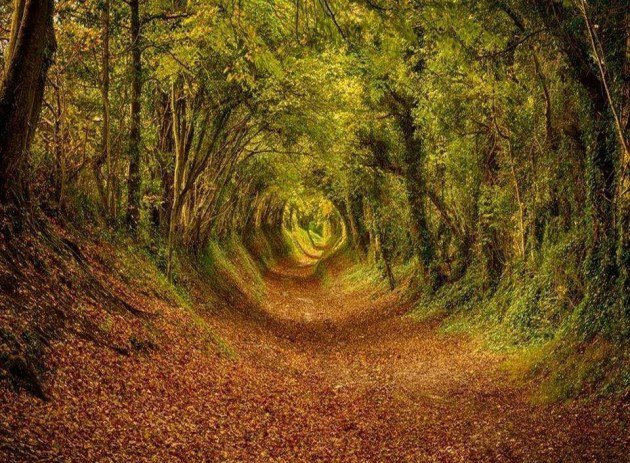 10-Startling-Tree-Tunnels-You-Must-Walk-Through-4-630x463