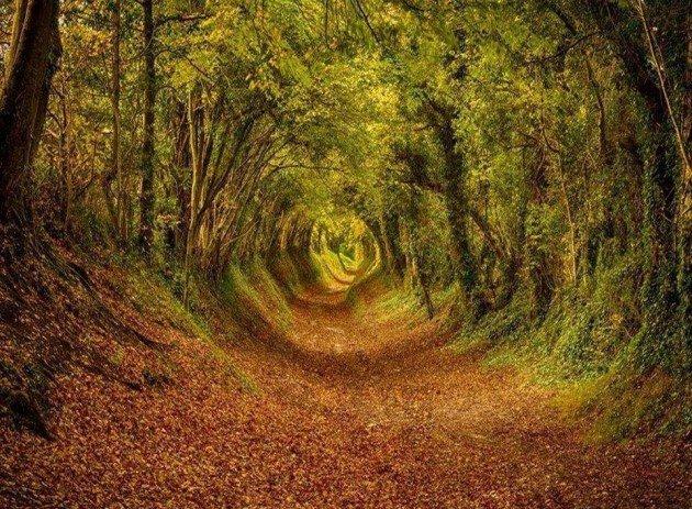 10-Startling-Tree-Tunnels-You-Must-Walk-Through-4-630x463
