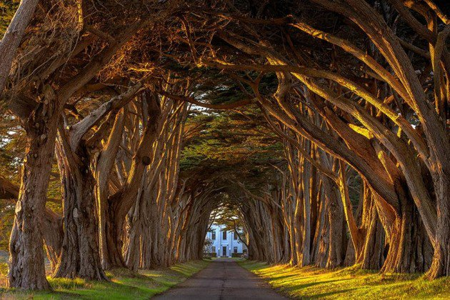 10-Startling-Tree-Tunnels-You-Must-Walk-Through-6-630x420 (1)