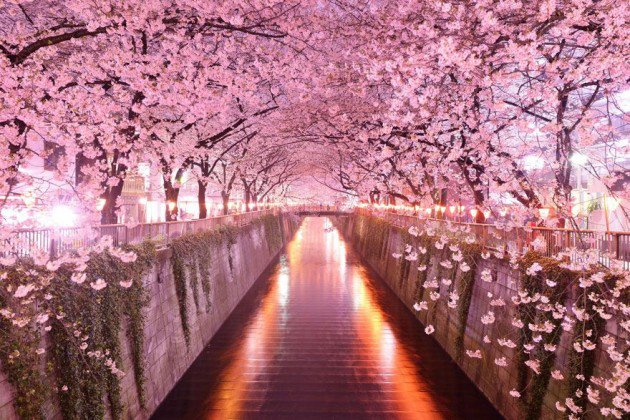 10-Startling-Tree-Tunnels-You-Must-Walk-Through-7-630x420